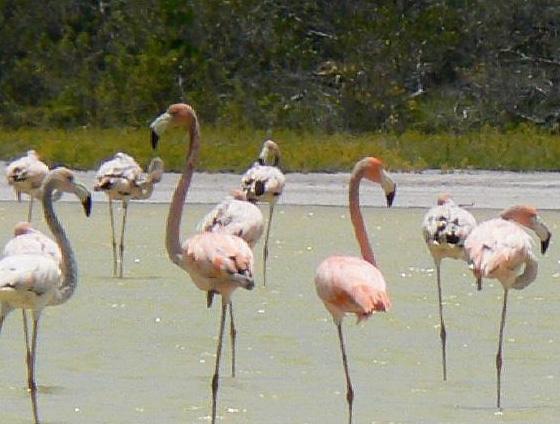 Jaragua National Park Dominican Republic Sheclick Com
