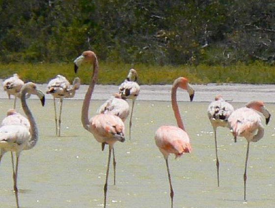 Jaragua National Park Dominican Republic