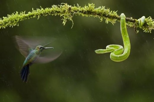 Amazing Bird and Snake Photography