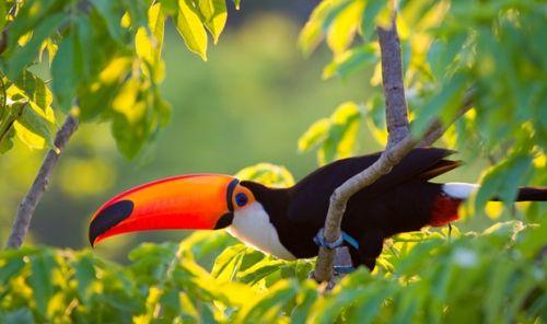 Awesome Wildlife Bird Photoshoot