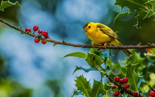 Beautiful Wildlife Bird Photo