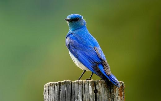 Blue Bird Photography - Wildlife