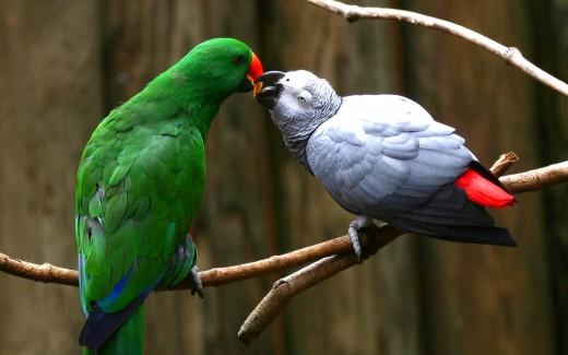 Fancy Birds - Wildlife Birds