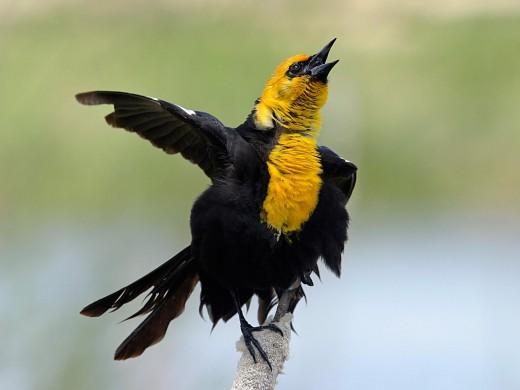 HD Wildlife Birds Photograph