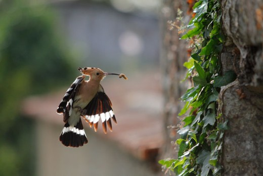 Interesting Urban Wildlife Bird Photography
