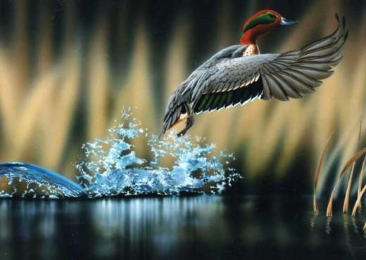New Wildlife Bird Photography Example