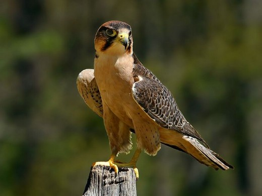 Outstanding Picture of Wildlife Bird Picture