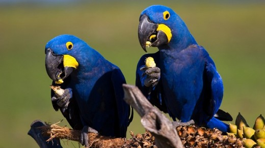 Parrot Bird Wildlife Photography