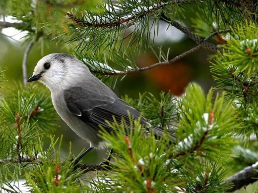 Wild Bird Photography Landscape