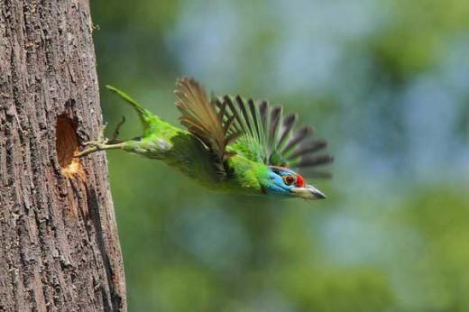 Wildlife Bird Photography - Bird Flying