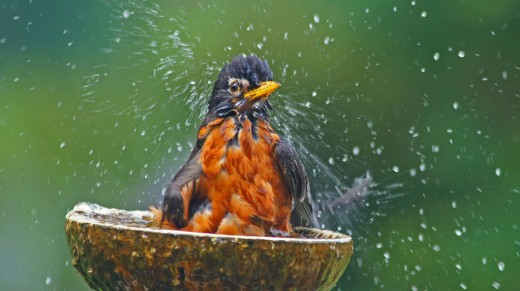 Wildlife Photography - Bird Playing in Water