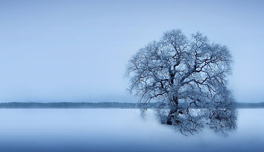 Winter Tree Wallpaper - Sleepless