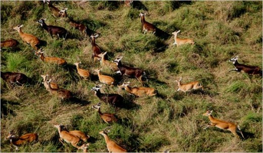 Animal Migration to Rival Serengeti