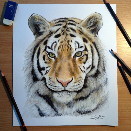 Tiger Pencil Drawing Picture