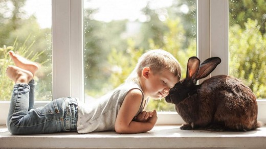 Small Boy and Little Rabbit Cute Wallpaper